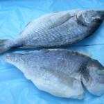 Dorada, sea Bream fish