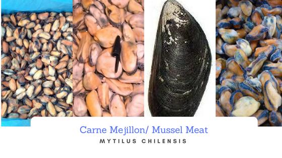 Carne de Mejillon-MUSSEL MEAT