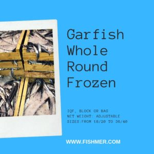 Garfish Whole Round Orphie de Mer