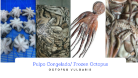 Pulpo Congelado – Frozen Octopus Whole Round and Cleaned